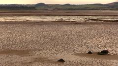 Bay algae - North Sea Stock Footage
