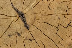 Tree stumps and felled forest deforestation Stock Photos