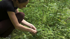 Girl picking flowers Stock Footage