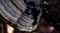 Tree fungus macro Stock Footage