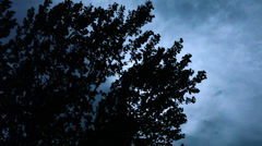 Swaying Trees, Silhouetted Against Ominous Night Sky Stock Footage