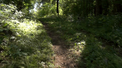 Up the forest path Stock Footage