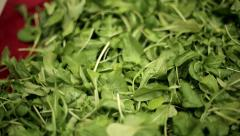 Green leaves of arugula closeup HD shot with slider Stock Footage