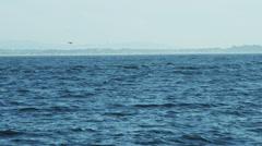 Sea lion animal swimming Monterey Pacific Ocean, California, USA - stock footage