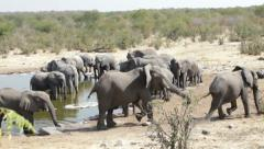 Elephant herd - stock footage