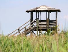 Hut for bird watching and bird life in the midst of the reeds Stock Photos