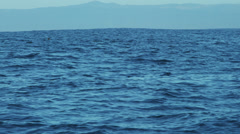 Colony Sea lions swimming Monterey coastal, Pacific coast, California, USA Stock Footage
