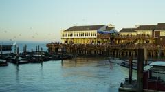 California Sea lions Pier 39 San Francisco Bay, Pacific Ocean, USA - stock footage