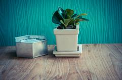 Beautiful green plant  on wooden table Stock Photos