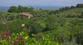 Summer nature landscape, green hills of Tuscany, Italy. 4k or 4k+ Resolution