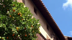 Orange tree with a fruit in the Spain village. Stock Footage