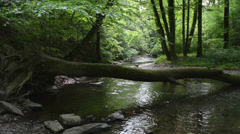 Elz river with forst all around Stock Footage