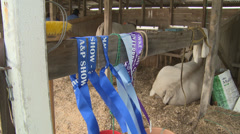 Ribbons at show Stock Footage