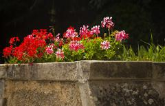 flowers in a garden, villa cimbrone, ravello, province of salerno, campania,  - stock photo