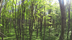 Slow beautiful flight  in  spring wood. Aerial slow motion Stock Footage