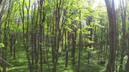 Stock Video Footage of Slow beautiful flight  in  spring wood. Aerial slow motion