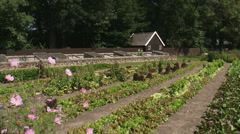 Traditional kitchen garden: salad beds, propagator, pan kale and cabbage Stock Footage