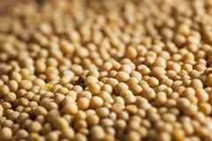 Raw organic mustard seeds Stock Photos
