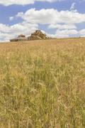 ruined adobe pigeon house between a cereal field and a cloudy blue sky - stock photo