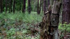 Treetrunk track up Stock Footage