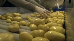 Potatoes harvesting, potato on the conveyor belt Stock Footage