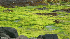 Flat moss among rocks wet with the rain water Stock Footage