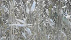 Stock Video Footage of vegetation