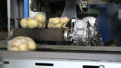 Packing machine, Potatoes on conveyor belt are packed Stock Footage