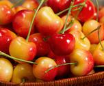 Stock Photo of basket filled with ripe golden cherries