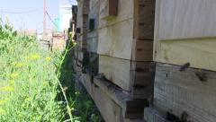 beehive, honey and bees - stock footage