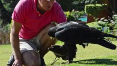Black Eagle (Verreaux's Eagle) Being Picked Up Stock Footage