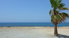 Palma on the wind beach Stock Footage