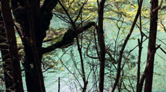 A forest lake in jiuzhaigou valley national park in china dolly shot Stock Footage