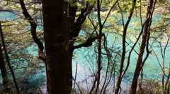 Forest lake in jiuzhaigou valley national park in china dolly shot Stock Footage
