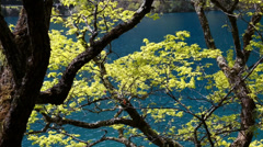 Beautiful forest lake in jiuzhaigou valley national park in china dolly Stock Footage