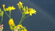 Stock Video Footage of Variety of wild flowers.