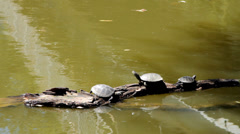 Turtles on a log in water Stock Footage