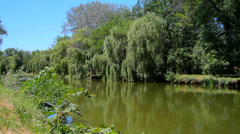 Pond at the city park Stock Footage