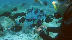 Scuba diver feeding tropical fishes Stock Footage
