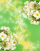 Camomile aroma Stock Illustration