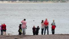 People look out for dolphins at, moray firth, inverness, scotland Stock Footage