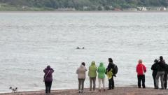 People look out for dolphins at moray firth, inverness, scotland Stock Footage