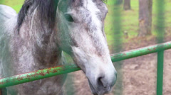 Horse behind a fence at the zoo Stock Footage