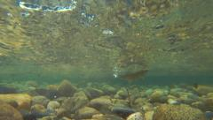Stock Footage underwater caught trout fishing - stock footage