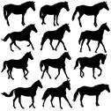 Stock Illustration of set vector silhouette of horse