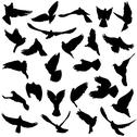 Stock Illustration of concept of love or peace. set of silhouettes of doves. vector illustration.