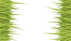 Grass concept card rendered on white Stock Illustration