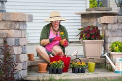 senior lady potting up plants in flowerpots - stock photo