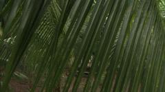 Jungle bungalo 5 Stock Footage