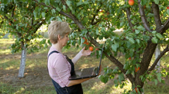 Agronomist in apricot orchard examine fruit - stock footage